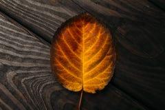 秋天红色和橙色叶子关闭 秋天木背景 库存图片