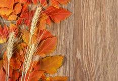 秋天红色在木背景、自然季节概念和对象离开和麦子钉 库存图片