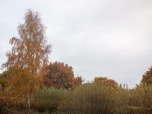 秋天红色橙树留下棕色秋天阴云密布喜怒无常的天空ba 免版税库存图片