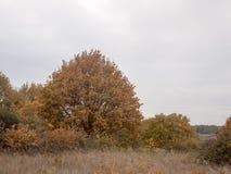 秋天红色橙树留下棕色秋天阴云密布喜怒无常的天空ba 库存图片