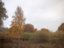 秋天红色橙树留下棕色秋天阴云密布喜怒无常的天空ba 免版税图库摄影