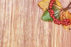 秋天红色莓果成群和在木背景的叶子与 库存图片
