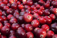 秋天红色醇厚的蔓越桔 库存图片