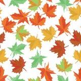 秋天纺织品传染媒介 枫叶无缝的样式 背景美好的叶子例证向量 绿色,黄色,桔子和红色 库存图片