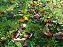 秋天细节在绿草和背景离开 免版税库存照片