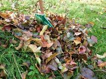 秋天细节在绿草和背景离开 免版税库存图片