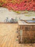 秋天细节,奥胡斯大学,丹麦 免版税库存照片
