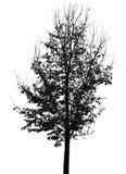 秋天结构树剪影 免版税库存图片