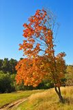秋天结构树在乡下 免版税库存图片