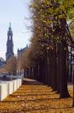 秋天结构树在德累斯顿市 免版税库存图片