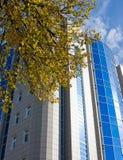 秋天结构树大厦和分行  免版税库存照片
