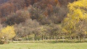 秋天结构树横向 免版税库存图片