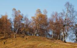 秋天结构树照片 图库摄影