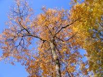 秋天结构树黄色 免版税图库摄影