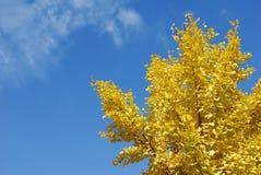 秋天结构树黄色 免版税库存照片