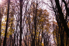 秋天结构树 库存图片