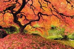秋天结构树 图库摄影
