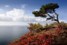 秋天结构树 库存照片