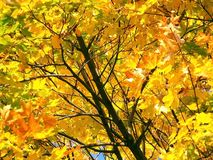 秋天结构树 免版税库存照片