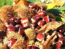 秋天结构的栗子、猬和栗子叶子 免版税库存图片