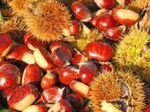 秋天结构的栗子、猬和栗子叶子 免版税库存照片