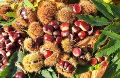 秋天结构的栗子、猬和栗子叶子 免版税图库摄影