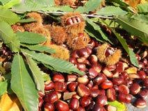 秋天结构的栗子、猬和栗子叶子 库存照片