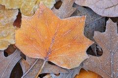 秋天结霜了叶子 库存图片