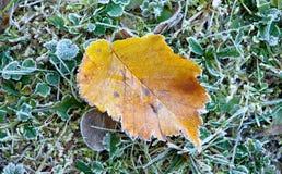 秋天结霜的叶子 免版税图库摄影