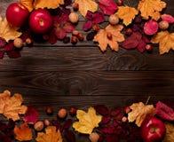 秋天绯红色和黄色叶子,榛子, w平的位置框架  免版税图库摄影