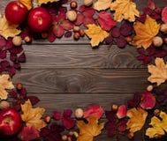 秋天绯红色和黄色叶子,榛子, w平的位置框架  库存照片