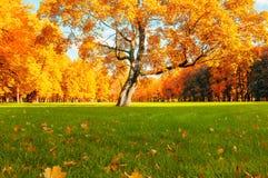秋天美丽如画的树在晴朗的秋天公园由阳光-秋天树在阳光下点燃了 免版税库存照片