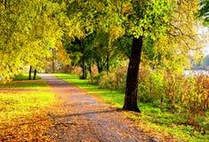 秋天美丽如画的风景 与下落的秋叶的秋天树在晴朗的天气 免版税图库摄影