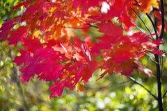 秋天美丽如画的bokeh  免版税库存照片