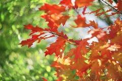 秋天美丽如画的bokeh  免版税库存图片