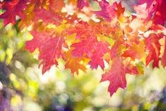 秋天美丽如画的bokeh  库存图片
