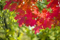 秋天美丽如画的bokeh  库存照片