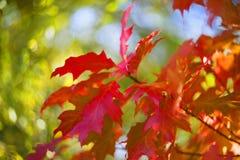 秋天美丽如画的bokeh  图库摄影