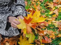 秋天美丽的公园妇女 妇女在有五颜六色的槭树的秋天公园离开 翠菊许多秋天的紫红色心情粉红色 免版税库存图片