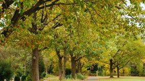 秋天美丽的公园 秋天在波恩,德国 秋天树和下落的叶子 秋天横向 股票录像