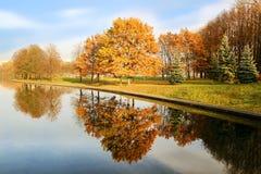 秋天美丽的公园 秋天在米斯克 秋叶结构树 秋天横向 公园在秋天 树的镜象反射在wa的 库存照片