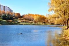 秋天美丽的公园 秋天在米斯克 秋叶结构树 秋天横向 公园在秋天 森林在秋天 库存照片