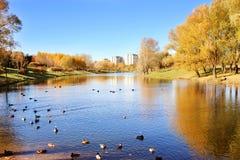 秋天美丽的公园 秋天在米斯克 秋叶结构树 秋天横向 公园在秋天 森林在秋天 免版税图库摄影