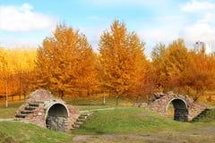 秋天美丽的公园 秋天在米斯克 秋叶结构树 秋天横向 公园在秋天 森林在秋天 图库摄影