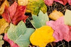 秋天美丽的公园 黄色和红色纹理离开作为autum 免版税库存照片
