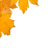 秋天美丽的叶子 图库摄影