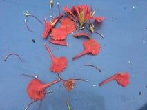 秋天美丽的桔子 库存图片