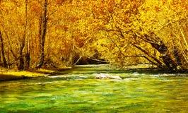 秋天美丽的森林河 免版税库存图片