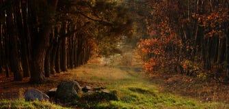 秋天美丽的森林 免版税库存图片