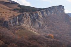 秋天美丽的森林 免版税库存照片